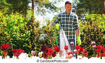 gardening and people concept - middle-aged man with garden hose pouring water to flower bed