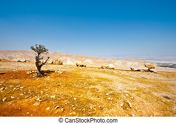 Middle East - Olive Grove on the Slopes of the Mountains of...