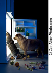 Midnight snacks - Cat and dog looking for meat in the...
