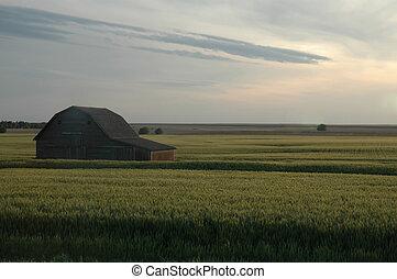 Landscape scene from Kansas showing a large barn in a crop field.