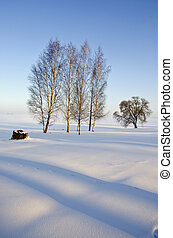 midwinter morning landscape with shadows and tree