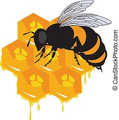 miel, abeilles, vecteur, rayon miel