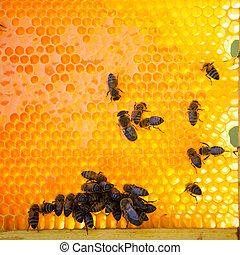 miel, abejas, producir, ocupado