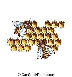 miel, croquis, illustration, encre