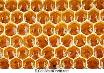 miel, macro, abeja, panal