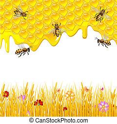 miel, plano de fondo, floral