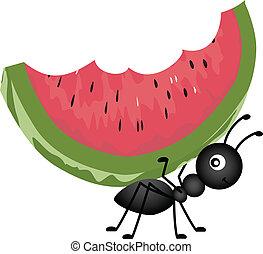 mier, verdragend, watermeloen