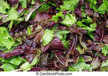 mieszany, świeży, sałatkowe ziele