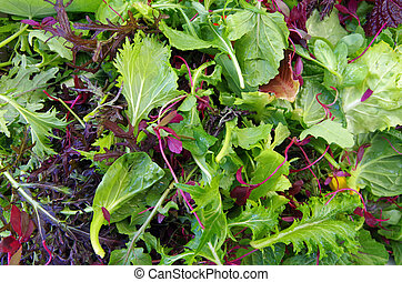 mieszany, pole, liść, closeup, ziele