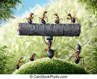 mighty ant Camponotus Herculeanus holding log with ants Formica Rufa