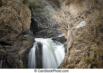 Mighty Epupa Falls. - A tree rooted in the Epupa Falls.