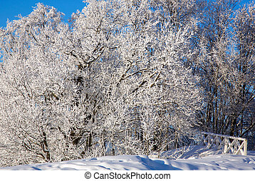 Mighty oak tree in frost with snow-covered branches against a blue sunny sky