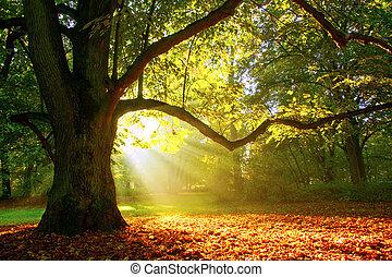 Oak tree on a foggy sunrise
