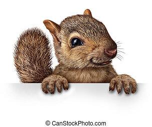 mignon, écureuil
