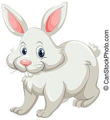 mignon, blanc, fourrure, lapin