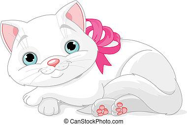 mignon, chat blanc
