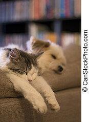 mignon, chat, et, chien, dormir, togeather