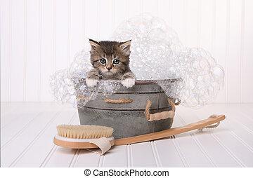 mignon, chaton, dans, washtub, obtenir, soigné, par, bain...