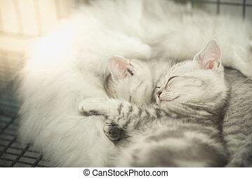 mignon, chatons, dormir, tabby
