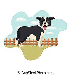 mignon, chien colley, fond, frontière, paysage