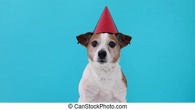 mignon, chien, conçu, chapeau partie, rouges