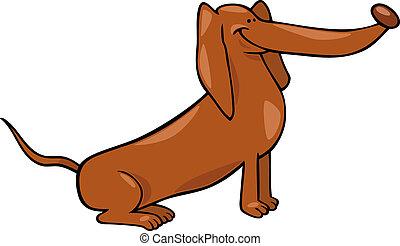mignon, chien, dessin animé, illustration, teckel