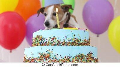 mignon, chien, gâteau anniversaire, chapeau partie