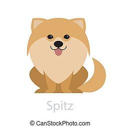 mignon, chien, rigolote, spitz, conjugal, puppy., petit, breed., beau