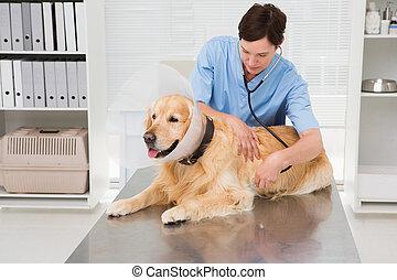 mignon, chien, vétérinaire, examiner