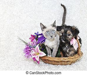 mignon, chiot, chaton