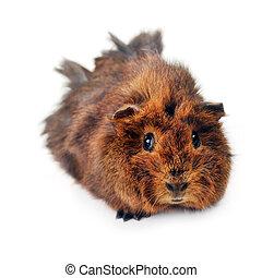 Mignon jeune cochon mignon n gligence mur jeune photo de stock rechercher - Image de cochon mignon ...