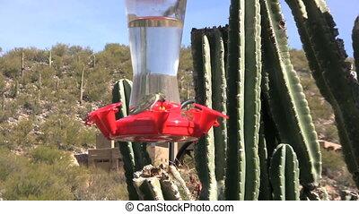 mignon, colibri