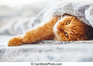 mignon, confortable, blanket., chouchou, pelucheux, pet.,...