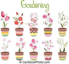 mignon, différent, fleurir pots, isolé, fleurs, white., rayé