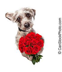 mignon, douzaine, chien, rouges,  roses