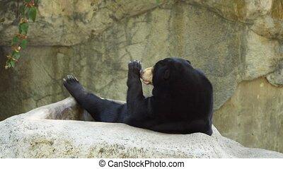 mignon, flâner, soleil, rocher, ours