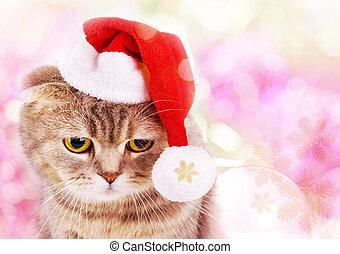 mignon, fond, coloré, claus, chat, santa chapeau, noël