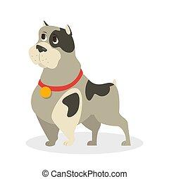 mignon, fourrure, rigolote, caractère, gris, chien, chiot, standing.