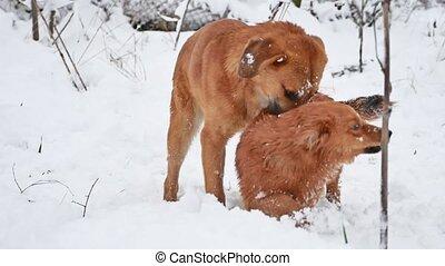 mignon, hiver, errant, chouchou, deux, chien, rue, ensemble...