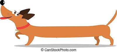 mignon, isolé, long, chien, gai, backg, blanc, teckel, dessin animé