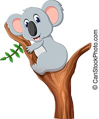 mignon, koala