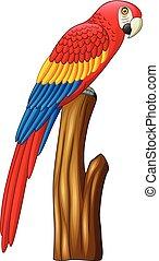 mignon, macaw, dessin animé, oiseau