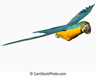 mignon, macaw