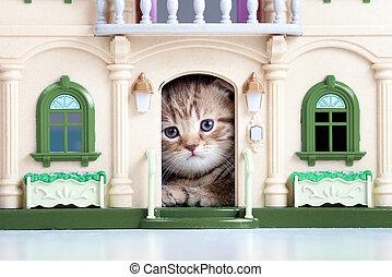 mignon, maison jouet, regarder, chaton, dehors