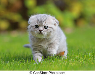 mignon, marche, herbe, vert, chaton