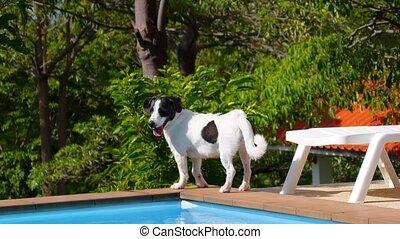 mignon, marche, pool., pittoresque, ensoleillé, chien, day...