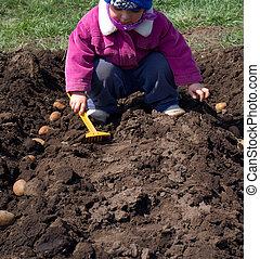 mignon, peu, semailles, pomme terre, process., girl, rang, ensemencer