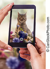 mignon, photographier, chat