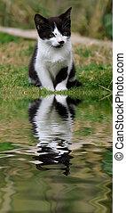 mignon, reflet, chaton