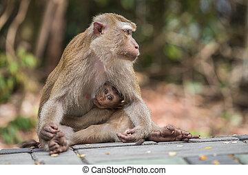 mignon, singe, elle,  nature, mère, bébé, Thaïlande